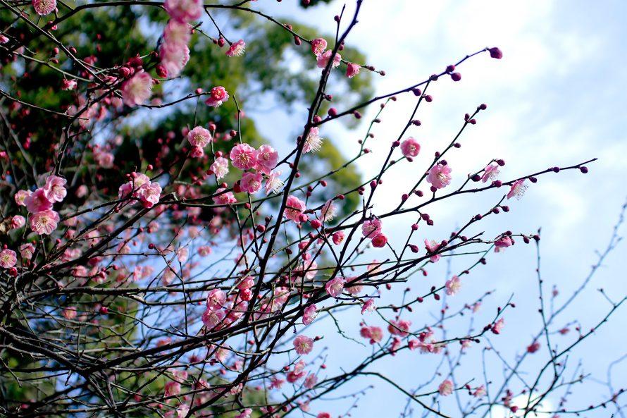 春の訪れの画像
