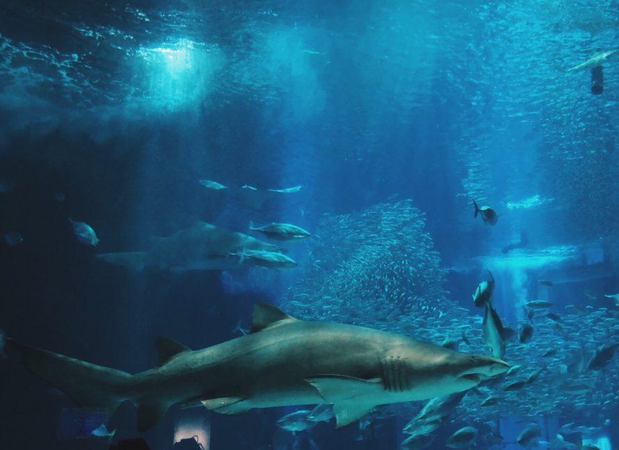 ひさびさの水族館の画像