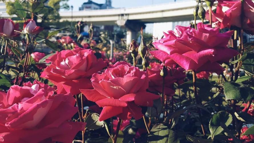 バラの花に想いを込めてプロポーズの画像